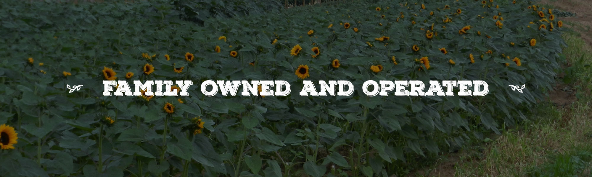 Family Owned and Operated overlay on image of Sunflower field