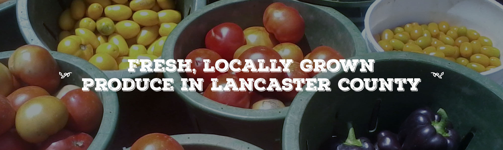 Fresh, Locally Grown Produce In Lancaster County overlay on image of baskets of a variety of different tomatoes